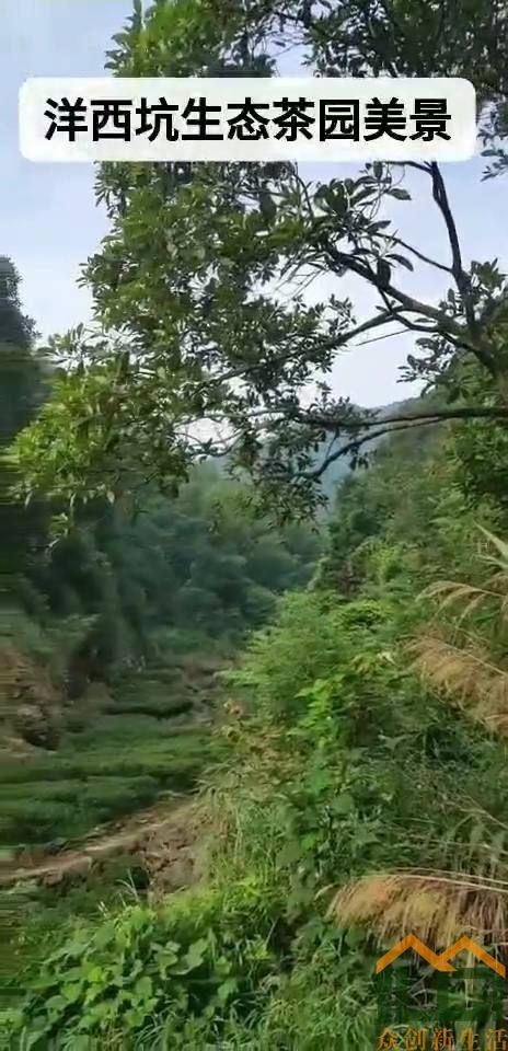 高山茶园,风光如画