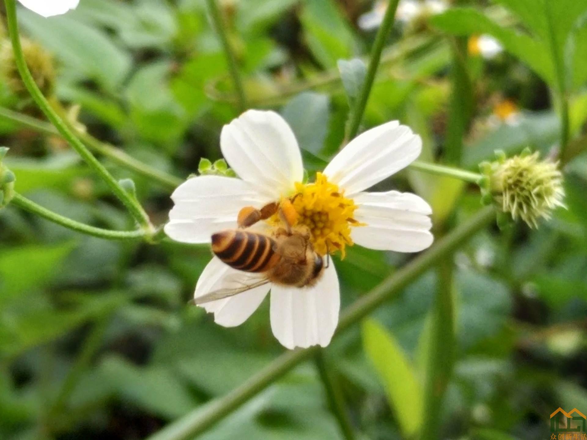 花香自引蜂蝶来