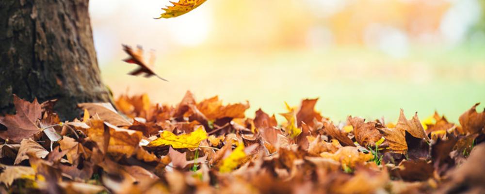 秋天养生吃什么好 秋季如何调理肠胃